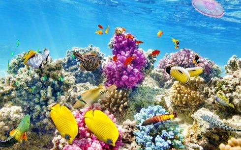 belize-reefs-underwater