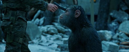 apes need food and water